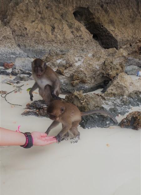 Monkey Beach (451 x 802)