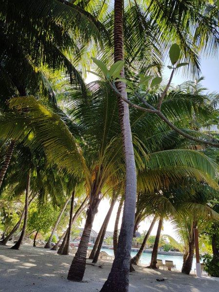 Our villa beach front